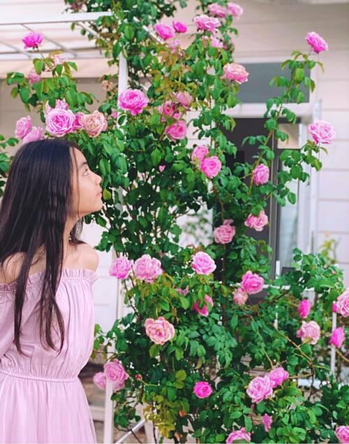 Bé Hạt Dẻ bên khóm hồng Soeur Emmanuelle. Gốc hồng này được chị Dạ Thảo trồng cách đây một năm. Chị đặc biệt mê giống hồng leo Pháp vì dáng hoa đẹp, cánh dày, màu hồng sen rực rỡ lúc vừa nở và nhạt dần khi gần tàn. Hương thơm ngọt ngào, tinh tế. Cây ra hoa rất sai, khoảng 5 tuần cây ra một đợt hoa và liên tục bật chồi mới, nhánh mới nên hoa nở cả nửa tháng vẫn chưa hết.