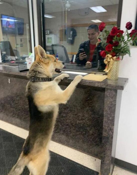 Con chó Chico đứng đợi cảnh sát giải quyết vụ đi lạc của mình. Ảnh: FB.