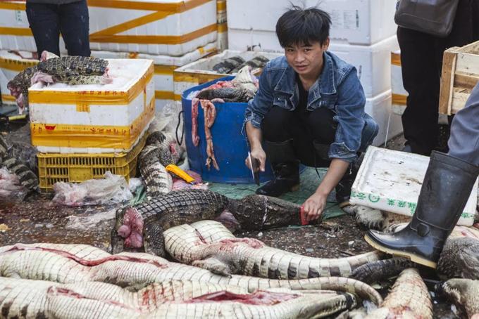Một người bán thịt cá sấu tại chợ hải sản Hoa Nam, Vũ Hán. Ảnh: SCMP.