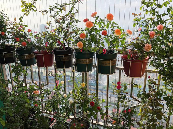 Chị Phương (31 tuổi, Hà Nội, làm việc tổ chức hỗ trợ doanh nghiệp Hàn Quốc tại Việt Nam) đã có hơn2 năm kinh nghiệm trong việc trồng và chăm sóc hoa hồng. Góc ban công của nhà chịchỉ vỏn vẹn 3 m2, còn là chỗ để đặt 1 máy giặt, 3 cục nóng điều hòa nhưng có lúc trồng tới30 chậu hoa hồng khác nhau.