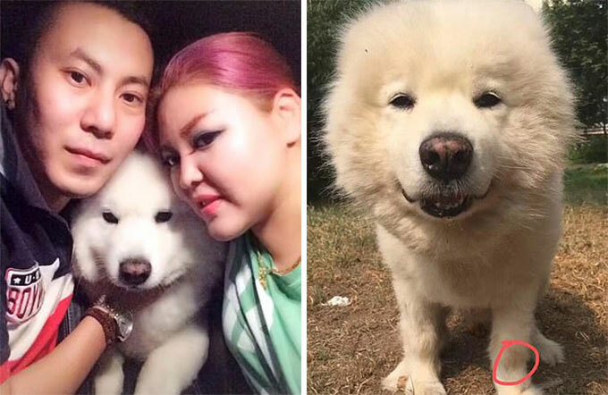 Vợ chồng Wang cùng con chó Reno khi nó còn sống. Ảnh: WeChat.