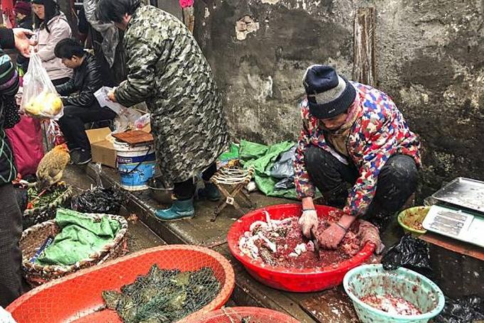 Một tiểu thương bán ếch ở chợ hải sản Hoa Nam, thành phố Vũ Hán, tỉnh Hồ Bắc, Trung Quốc. Ảnh: SCMP.