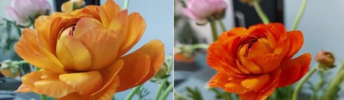 Chị em mê hoa cũng có thể bắt đầu ngay với các loài hoa yêu thích. Trong ảnh, hoa mao lương khoe trọn các màu sắc đa dạng lẫn vân sọc mềm mại nơi viền cánh, điều mà mắt thường đôi khi không để ý đến. Ảnh cận cảnh giàu cảm xúc và nghệ thuật hơn rất nhiều, thao tác chụp dễ dàng để cho ra bức ảnh đẹp.