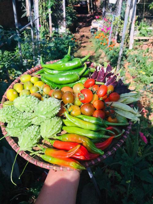 Niềm vui thu hoạch của người nông dân 8X.