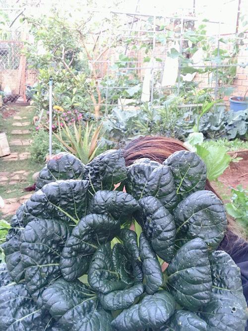 Khu vườn không rộng những được chị Tuyền quy hoạch gọn gàng, trồng nhiều loại rau trái: rau ăn lá, rau leo giàn, nhiều loại củ...