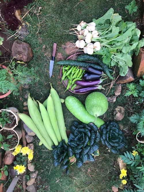 Nông sản thu hoạch từ vườn nhà luôn đa dạng và tươi ngon.
