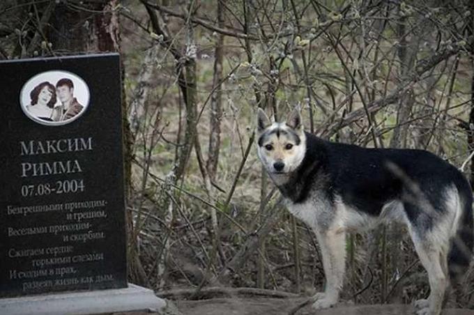 Chú chó sốngcạnh mộ ông bà chủ kể từ năm 2004. Ảnh: Newsflash.