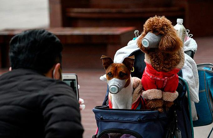 Người dân Trung Quốc đeo khẩu trang để phòng lây bệnh cho thú cưng. Ảnh: AFP.