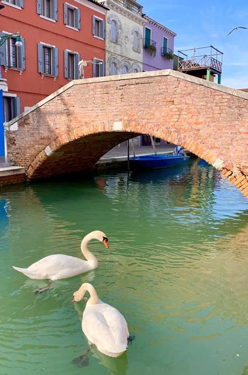 Thiên nga, cá heo đổ bộ Italy sau lệnh phong toả - 7
