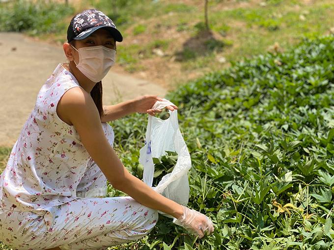 Ngày thứ bảy tại khu cách ly tập trung ở Bình Dương, siêu mẫu Võ Hoàng Yến phát hiện một vườn rau khoai lang non mơn mởn. Cô và các bạn cùng phòng quyết định hái về luộc cho bữa trưa thêm vitamin.