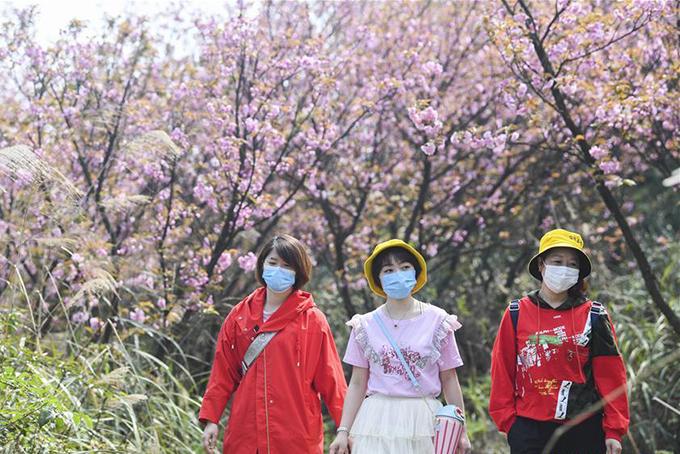 Nhóm du khách tham quan công viên sinh thái ở thành phố Trùng Khánh hôm đầu tuần. Ảnh: Xinhua.