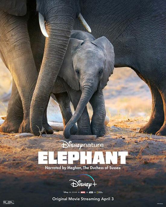 Poste phim Elephant của Disney, ghi tên người tường thuật là Meghan, Nữ công tước xứ Sussex.