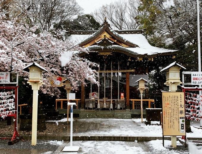 Mái đền ở Tokyo phủ đầy tuyết, có nơi người dân còn có thể nặn người tuyết. Vùng ngoại ô Tokyo tuyết rơi càng dày hơn. Không ít người cho rằng thời tiết này quá điên rồ nhưng cũng thật đẹp. Ảnh Koji