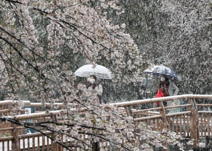 Vài người đeo khẩu trang, che dù đi dưới tuyết dày nhưng vẫn không quên nán lại chụp ảnh. Ảnh Senkai