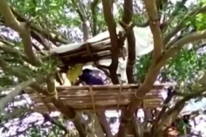 Một trong những chiếc lều được dân làng Bijoy Sing Laya, Tay Bengal, dựng trên cây. Ảnh: Reuters.