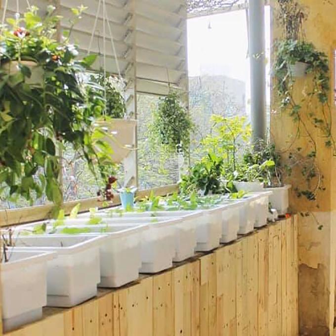Các dãy chậu trắng xếp liền nhau ở ban công được dùng để trồng rau, dãy chậu treo bên trên để trồng hoa.Các cây lấy quả như cà chua, ớt, khế, dâu tây được trồng trong các chậu di động để chị có thể thay đổi chỗ để linh hoạt.Trong ngày, chị tranh thủ tưới cây, tỉa lá vào giờ nấu cơm vì ban công ở cạnh bếp. Ban công nhỏ đủ cung cấp rau xanh cho cả gia đình, đáp ứng tiêu chí mùa nào thức ấy.