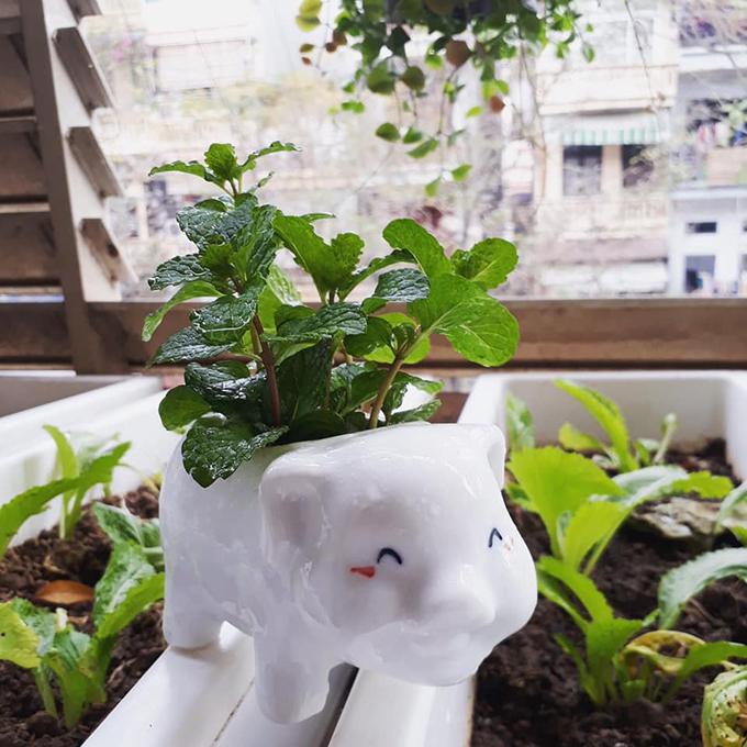 Khi bắt đầu trồng rau ở ban công nhà tập thể, Daisy Tú Anh thử với rau gia vị trước tiên. Các loại rau nàykhông cần đầu tư nhiều tiền hạt giống, dễ sống. Mỗi lần mua rau sống ngoài hàng như húng quế, bạc hà, rau mùi, tôi sẽ giữ lại gốc, cắm xuống đất và tưới nước đều đặn. Chỉ sau vài ngày, cây ra rễ và chồi mới. Các loại hành ta, hành tây, gừng tỏi nếu không ăn hết có thể trồng để ăn dần, chị tiết lộ. Các loại rau gia vị không chỉ được chị trồng để ăn mà còn có tác dụng trang trí bếp.