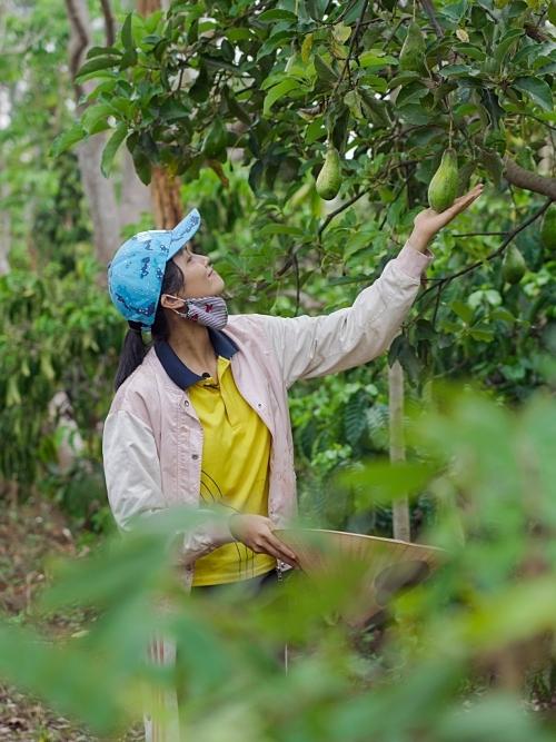 cùng với những người phụ nữ trong nhà sẽ làm những công việc nhẹ như hái điều, hái cà phê, hái tiêu...,