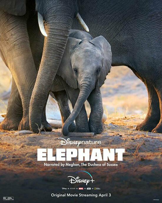 Posterphim Elephant của Disney ghi tên người dẫn truyện là Meghan - đánh dấu công việc hậu hoàng gia đầu tiêncủa Nữ công tước xứ Sussex.