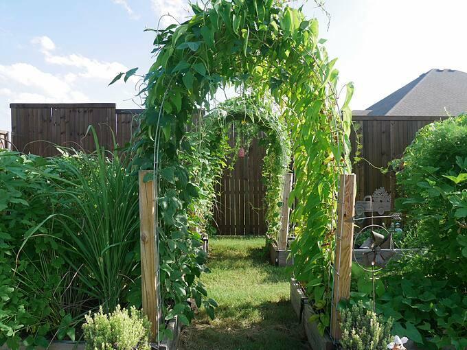 Có công việc kinh doanh riêng nhưng làm vườn với chịDiem Goleman (Texas, Mỹ) là niềm đam mê bằng cả trái tim. Bà mẹ hai con thích trồng mọi thứ, từ hoa đến cây ăn quả và rau... Khu vườn cũng được vợ chồng chị quy hoạch một cách gọn gàng, sạch sẽ.