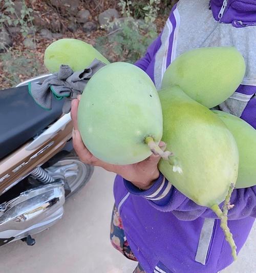 Sắp tới, Minh Chuyên dự định dành thời gian cải tạo khu vườn. Cô muốn trồng thêm một số cây ăn quả, rau xanh để phục vụ bữa ăn gia đình đồng thời chăn thả một số gia cầm loại dễ chăm sóc.