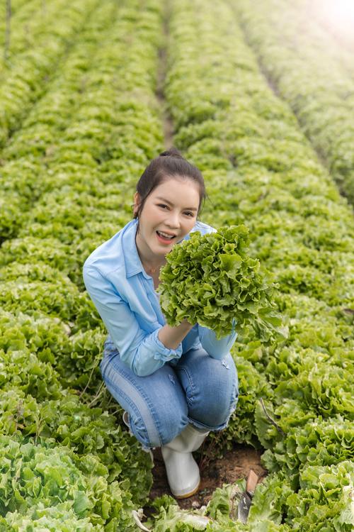 Lý Nhã Kỳ thu hoạch rau xà lách trong nông trại ở Đà Lạt.