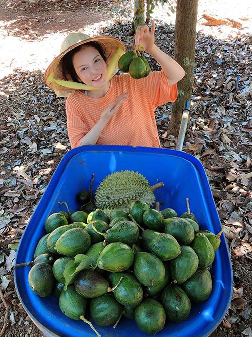 Lý Nhã Kỳ thu hoạch sầu riêng và bơ ở vườn cây tại Bà Rịa - Vũng Tàu.