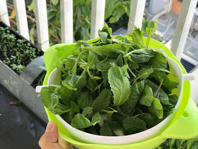 Mẹ 2 con chọn các rau ngắn ngày, dễ trồng cho vườn ban công gồm: rau cải, rau muống, mồng tơi, dền, mướp, ớt, bầu, khổ qua, rau đay.