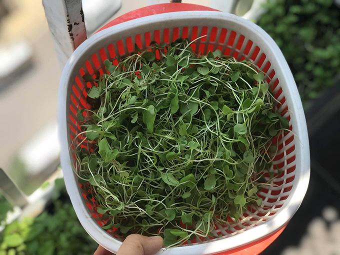 Từ ngày trồng rau ban công, tôi không cần phải mua thêm rau, thậm chí còn có dư để tặng chị gái, bạn bè, chị kể.