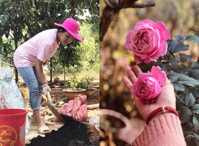 Từ đầu năm 2020, Kiều Trinh về quê tránh dịch Covid-19. Lúc này, nữ diên viên  tranh thủ cải tạo vườn nhà, lựa chọn loại hoa hồng yêu thích trồng khắp vườn. Ngoài ra, các loại cây ăn trái cũng được cô chăm sóc kỹ lưỡng.