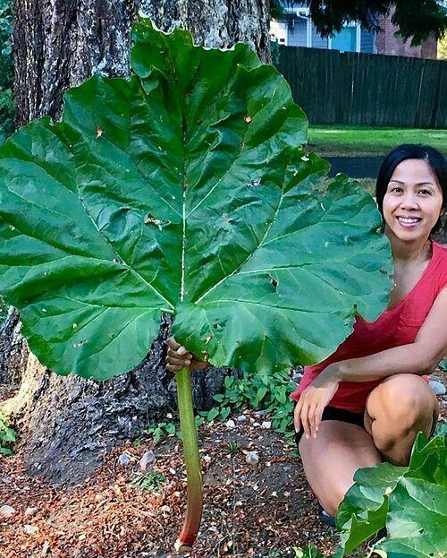 Misilla (hiện sống tại bang Washington, Mỹ) đã có một tuổi thơ gắn liền với thiên nhiên ở đất nước nhiệt đới gió mùa Philippines. Cô bảo, nhà của mình khi đó được bao quanh bởi những cây ăn quả như xoài, chuối, ổi, dừa. Gia đình cô còn có một khu vườn nhỏ để trồng trọt.