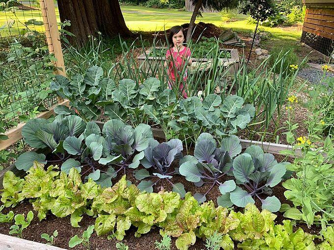 Hiện tại, khu vườn của gia đình cô đã lên đến diện tích gần 100 m2 và còn tiếp tục được mở rộng trong tương lai.