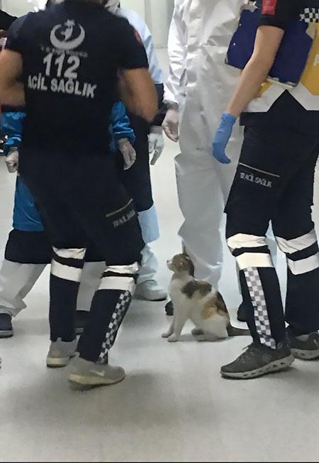 Mèo mẹ chăm chú theo dõi khi các y bác sĩ kiểm tra cho mèo con. Ảnh: Twitter.