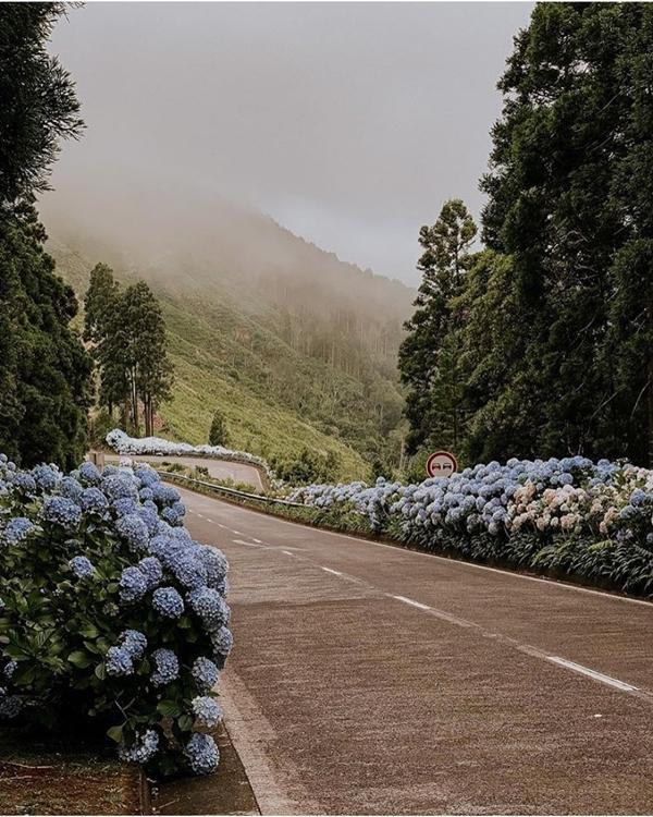 Hoa nở gần như suốt cả năm, kể cả ngày hè nóng nực hay những tháng đông lạnh giá.
