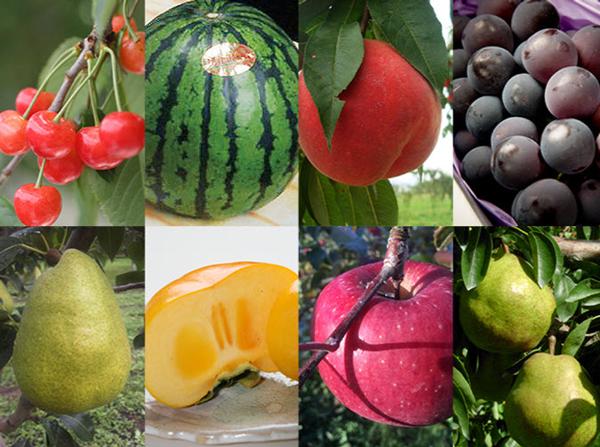 Những trái cây lỗi bán trên website củatrang trại Yamagata Sakuranbo. Ảnh: SCMP.