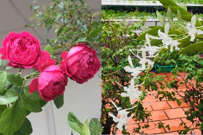 Đạo diễn Hoàng Nhật Nam trồng vườn rau ởpenthouse tặng vợ - 22
