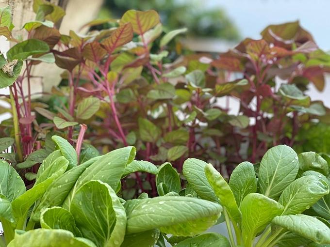 Đạo diễn Hoàng Nhật Nam trồng vườn rau ởpenthouse tặng vợ - 8