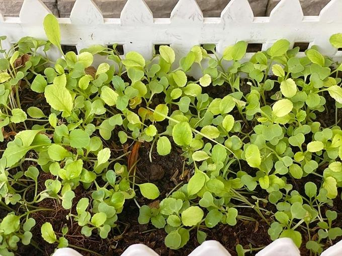 Vườn rau trên sân thượng của bà trùm hoa hậu - 8