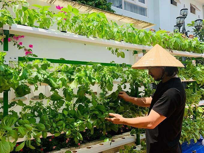 Các giống rau tôi được nhà vườn thủy canh cung cấp, hoặc dễ dàng mua các bịch hạt giống bán rộng rãi ở các siêu thị, hoặc cửa hàng cây xanh, nam đạo diễn cho hay.