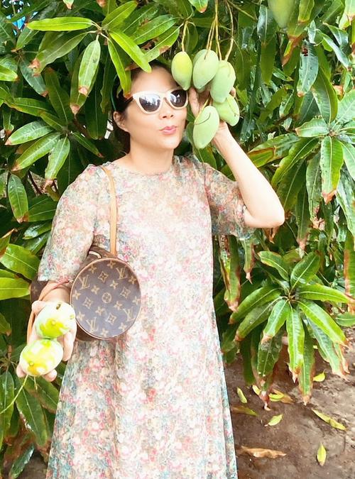 Mỹ Lệ thích thú khi được thăm vườn xoài của người dân, tự hái cho mình vài trái chín cây.