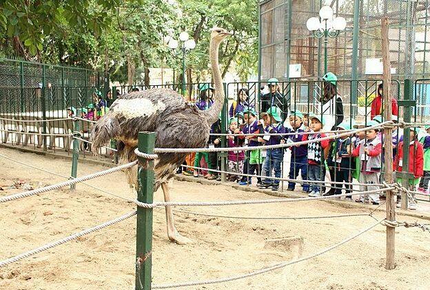 Các bé thích thú trải nghiệm thiên nhiên hoang dã tại công viên Thủ Lệ.