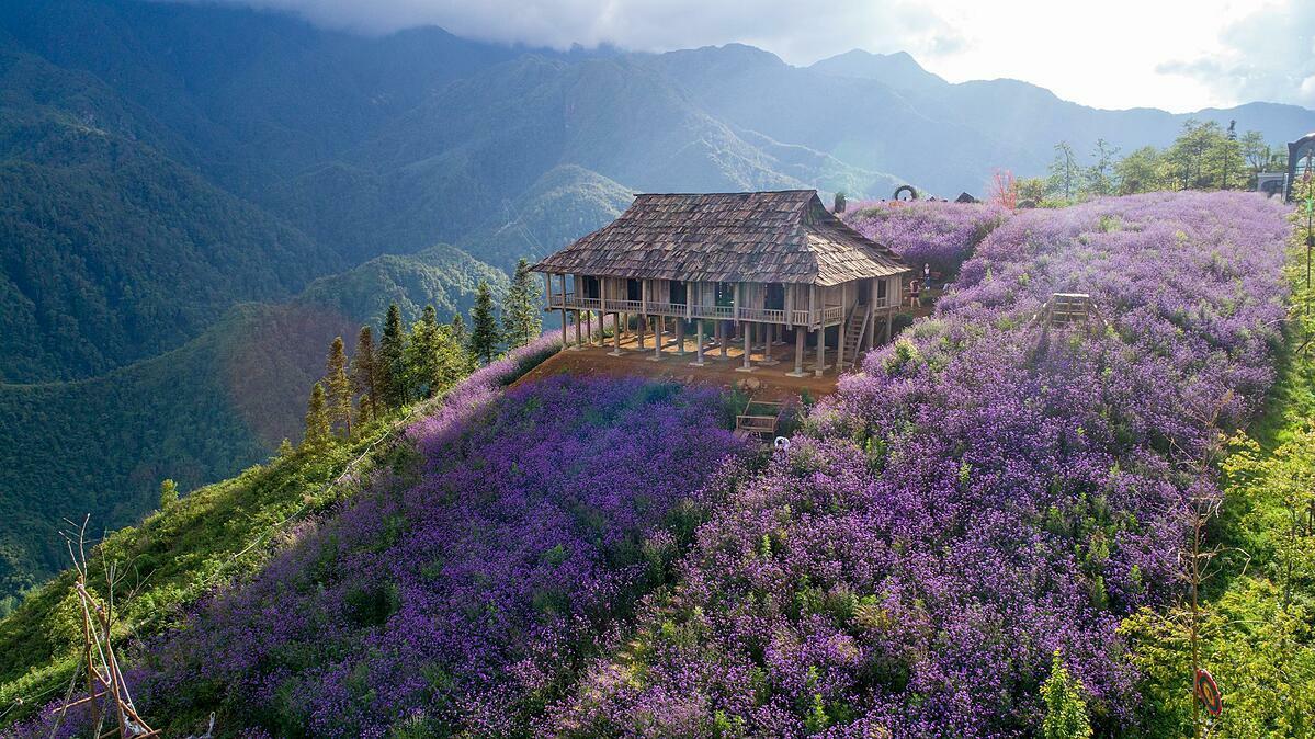 Thung lũng hoa tím tại Sun Wolrd Fansipan Legend