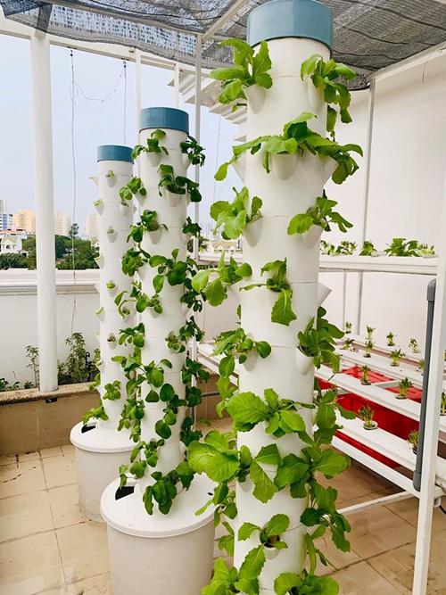 Tháp rau của nam MC hồi mới gieo trồng. Tháp rau hữu cơ là phương án được nhiều nông dân đô thị lựa chọn vì công việc chăm sóc đơn giản, cho ra nhiều luống rau sạch, an toàn khi sử dụng. Người dùng chỉ cần bỏ rác hữu cơ vào lõi, thu hoạch nước dưới khay đựng dịch trà trùn để tưới lên đỉnh tháp thường xuyên. Nhờ quy trình khép kín của tháp rau, người dùng sẽ không cần phải mua thêm phân bón bên ngoài, giúp rau luôn tốt tươi.