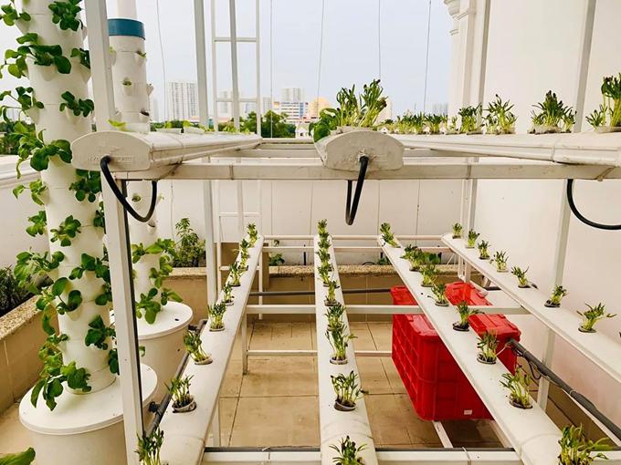 Đại Nghĩa đầu tư hệ thống trồng rau sạch bài bản, tưới tiêu tự động, giúp giảm sức lao động của con người và nhanh có rau sạch để ăn.