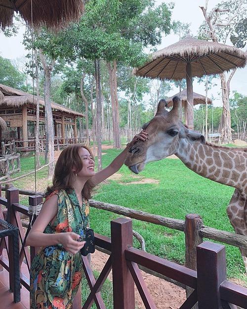 Hoàng Thùy Linh cười khoái chí khi đùa nghịch cùng hươu cao cổ trong chuyến du lịch ở Phú Quốc.