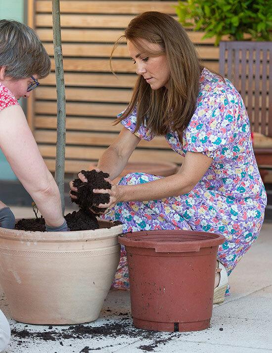 Không chỉ trồng hướng dương, bà mẹ ba con còn gieo và trồng thêm nhiều loại cây khác như dâu tây, hoa oải hương, hoa phong lữ, và thảo mộc. Tất cả các loại cây hoa này đều giúp trẻ em thư giãn, đánh thức các giác quan.