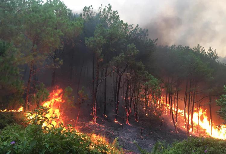 Đám cháy tại xã Diễn Phú chiều 29/6. Ảnh: CTV.