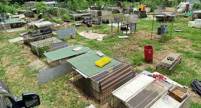 Những chiếc chuồng nuôi nhốt động vật trong khu đất tại hạt  Henry, bang Tennessee, Mỹ. Ảnh: Văn phòng cảnh sát hạt Henry.