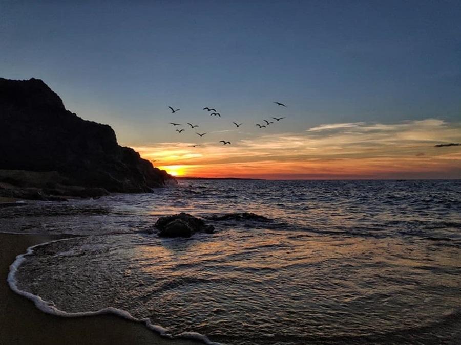 Từng đàn chim hải âu bay về nơi trú ngụ sau một ngày kiếm ăn mệt mỏi.