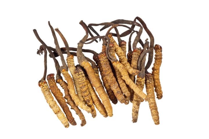 Đông trùng hạ thảo là giống nấm mọc ký sinh trên con non của loại sâu thuộc họ Cánh bướm.